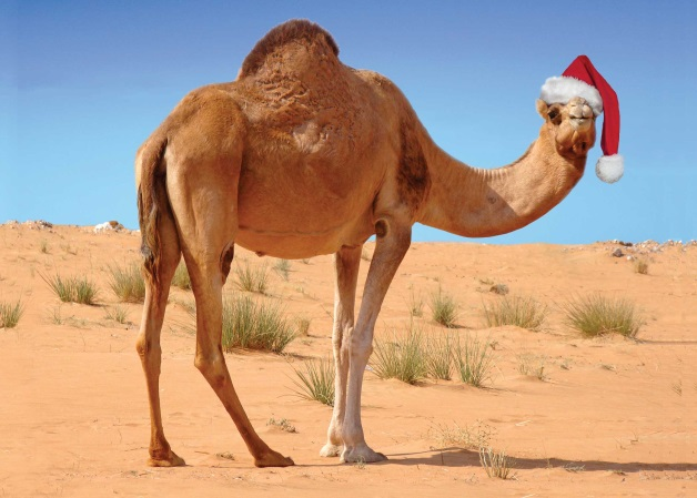 Three Kings Camel